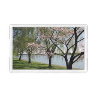 Bandeja do serviço da flor de cerejeira e do