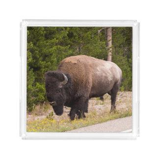 Bandeja do serviço da foto do búfalo do bisonte