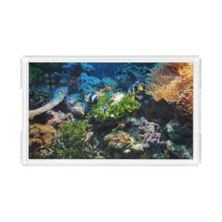 Bandeja do serviço do recife de corais
