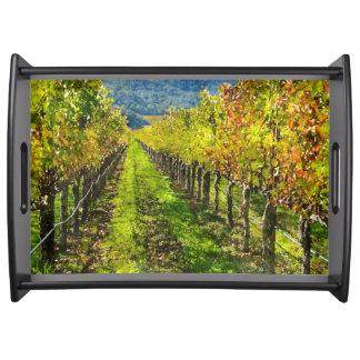 Bandeja Fileiras das vinhas em Napa Valley Califórnia