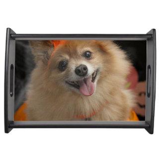 Bandeja Filhote de cachorro Foxy de sorriso de Pomeranian