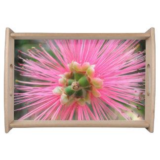 Bandeja Flor cor-de-rosa da árvore de goma