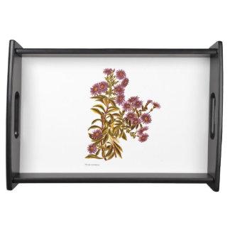Bandeja Flores da ciência NZ do vintage - semidentata do