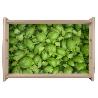 Bandeja Folhas verdes da manjericão