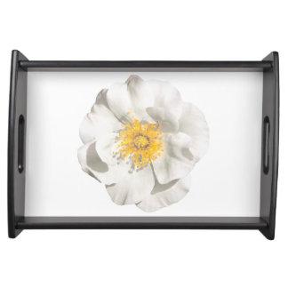 Bandeja Foto da flor branca