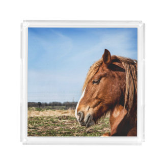 Bandeja fotográfica do serviço do cavalo