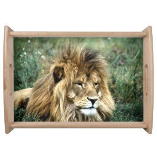 Bandeja Leão africano