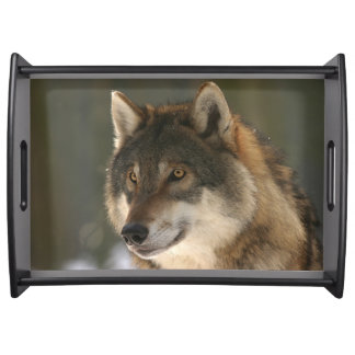 Bandeja Lobo europeu