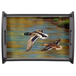 Bandeja O pato selvagem Ducks o voo sobre a lagoa