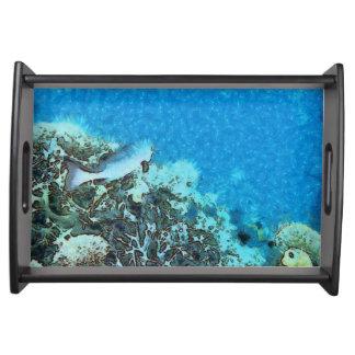 Bandeja Peixes que movem-se sobre o recife