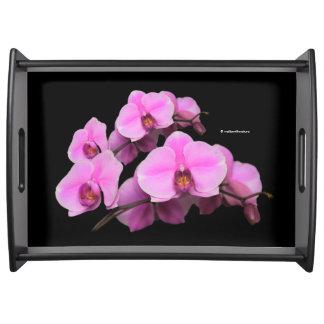 Bandeja Phalaenopsis cor-de-rosa elegante das orquídeas no