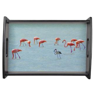 Bandeja Rebanho cinzento e cor-de-rosa dos flamingos no