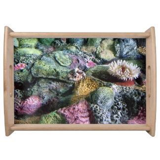 Bandeja Recife de corais colorido lunático