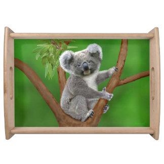 Bandeja Urso de Koala de olhos azuis do bebê