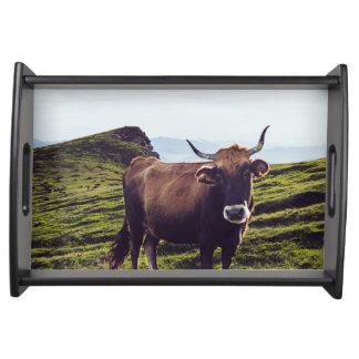 Bandeja Vaca bovina na paisagem bonita