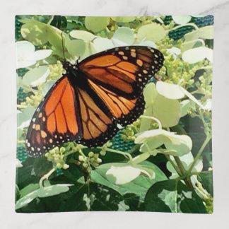Bandejas Bandeja do Trinket da borboleta de monarca