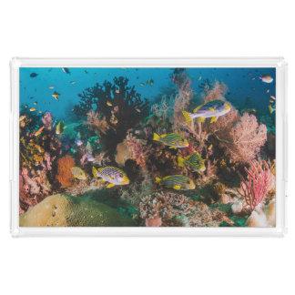 Bandejas do serviço do recife de corais