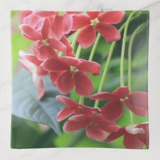 Bandejas Escape floral