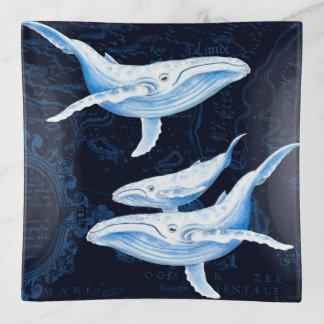 Bandejas Índigo da família da baleia