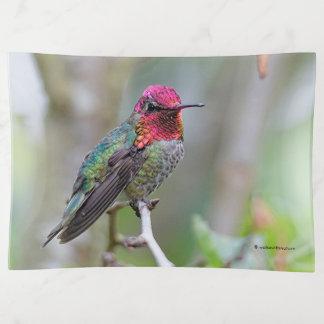 Bandejas O colibri impressionante de Anna masculina na