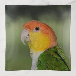 Bandejas Papagaio inchado branco do Caique fora