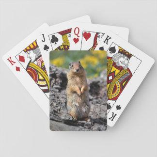 Baralho Alerta do esquilo à terra para o perigo