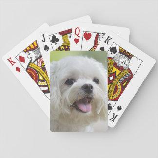 Baralho Cão maltês branco