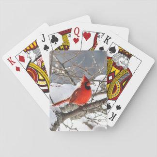 Baralho Cardeal do norte na neve