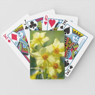 Baralho Daffodils bonito, narciso 03,1