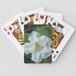 Baralho Flor tropical branca encontrada em Fiji