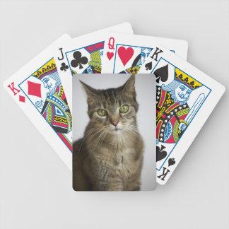 Baralho gato