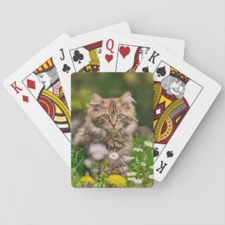Baralho Gato bonito do gatinho do racum de Maine em um