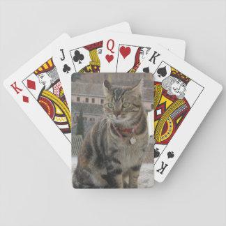 Baralho Gato dos cartões de jogo