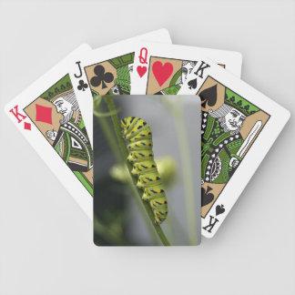 Baralho Lagarta preta do swallowtail (parsleyworm) em Dil