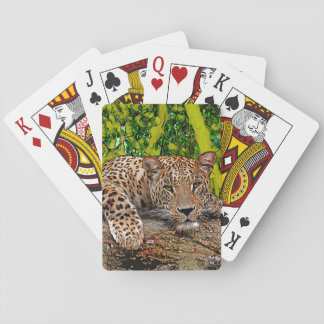 Baralho Leopardo preguiçoso