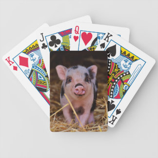Baralho mini porco