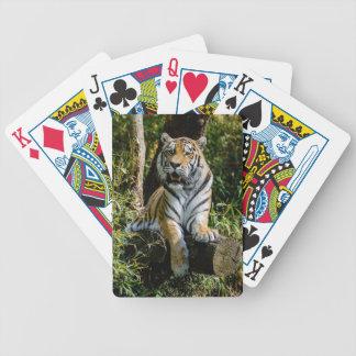 Baralho Para Poker Tigre dos alugueres em Muenster