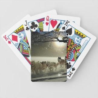 Baralho Para Pôquer Raça ronca do Alasca do trenó do cão