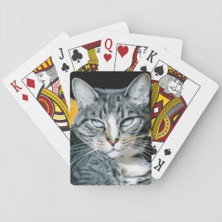Baralho Plataforma de cartão do gatinho de Zoe