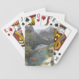 Baralho Plataforma de cartão do jogo do cavalo