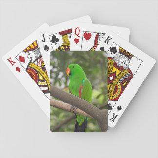 Baralho Retrato verde do papagaio