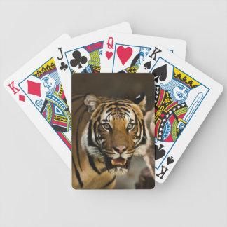Baralho Tigre Siberian