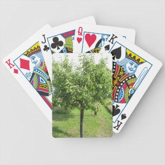Baralhos De Poker Árvore de pera com folhas do verde e frutas