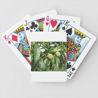Baralhos De Poker Dois pêssegos verdes unripe que penduram em uma