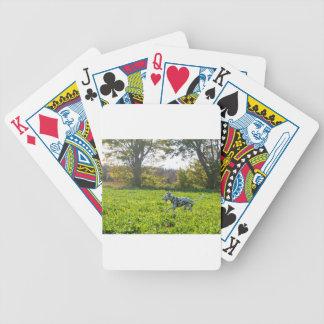 Baralhos De Poker Kevin o Dalmatian