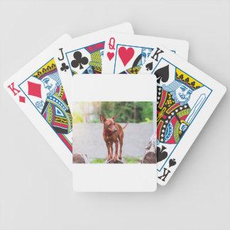 Baralhos De Poker Retrato do cão vermelho do pinscher diminuto
