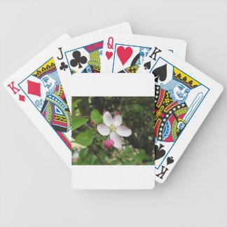Baralhos De Pôquer Flor cor-de-rosa da maçã no primavera. Toscânia,