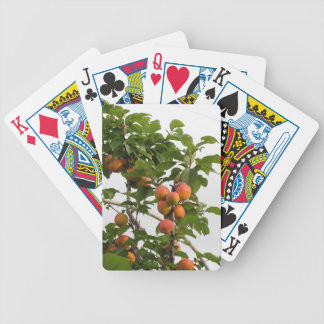 Baralhos Para Poker Abricós maduros que penduram na árvore. Toscânia,