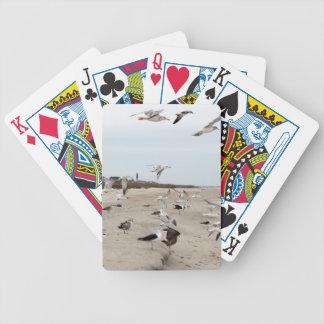 Baralhos Para Poker Gaivotas que voam, estando e comendo na praia