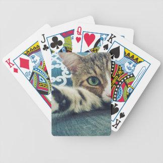 Baralhos Para Poker Gato de gato malhado bonito com olhos verdes